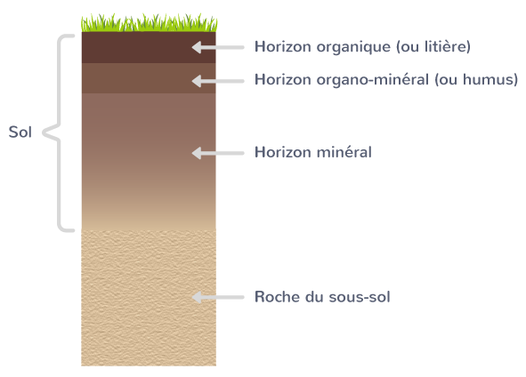 organisation sol couches superposées horizons roche mère