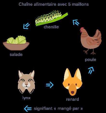 définition chaîne alimentaire