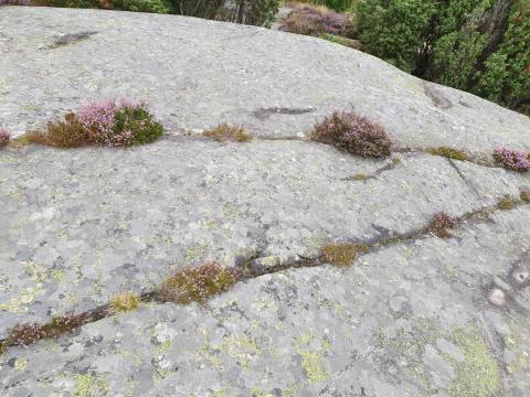 origine sol altération roche mère