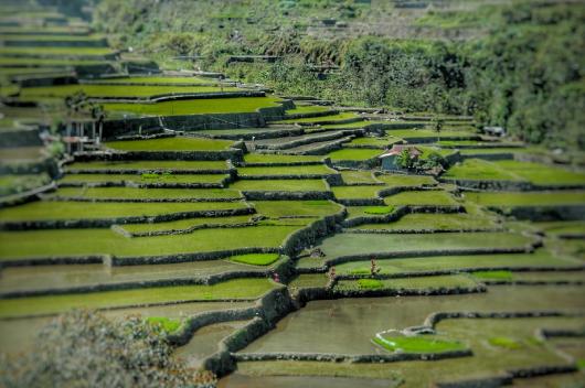 différents paysages dans le monde rizière d'Asie