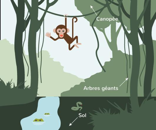 différents paysages monde forêt tropicale