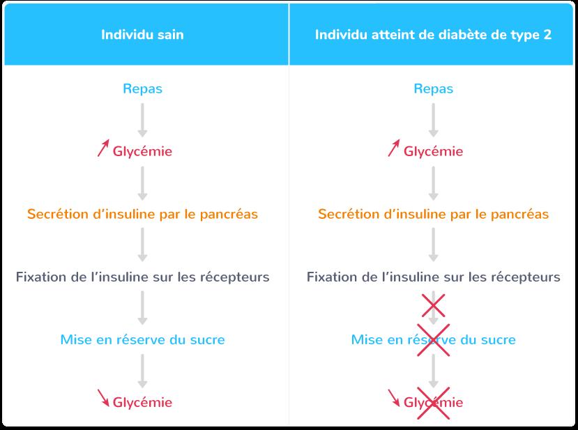 caractéristiques diabète type II