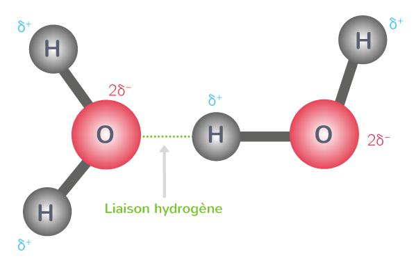 définition liaison hydrogène