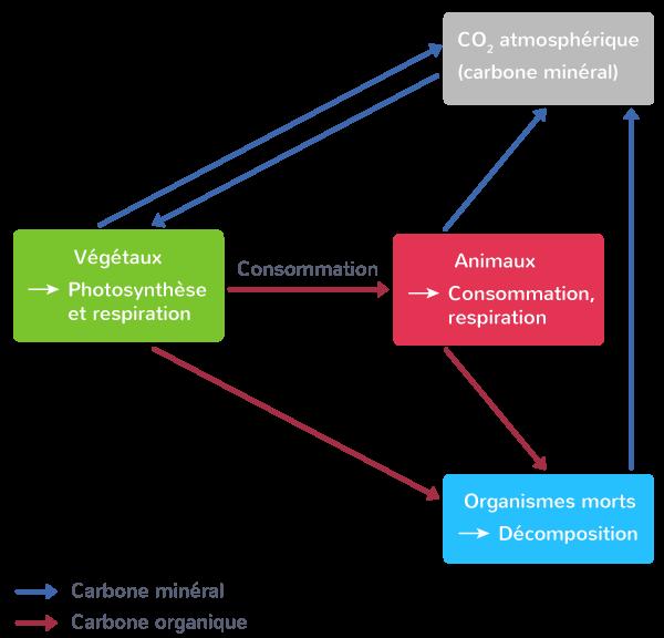 effet écosystèmes cycles biogéochimiques