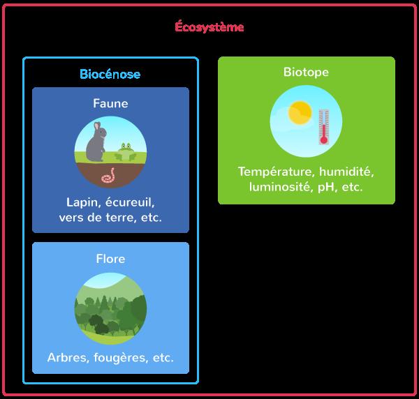 diversité interactions écosystème