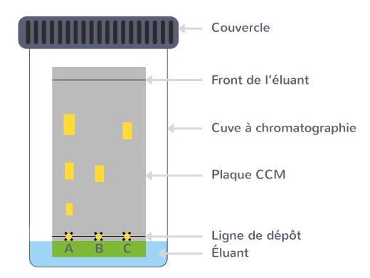 réalisation chromatographie sur couche mince étapes