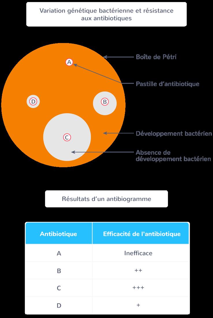 définition antibiogramme
