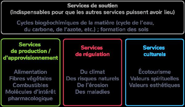 services écosystémiques rendus écosystèmes quatre catégories