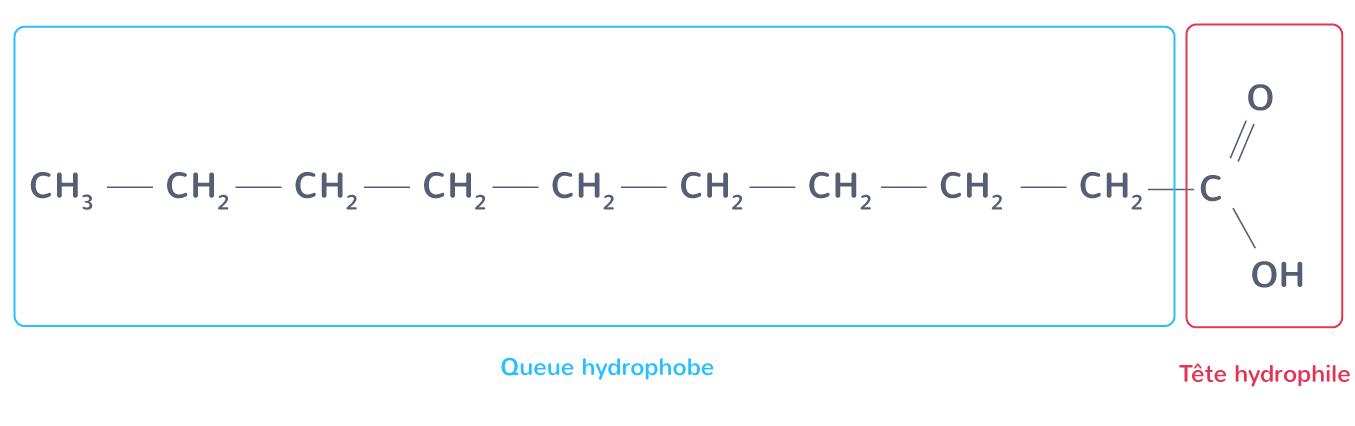 acide décanoïque tensioactif