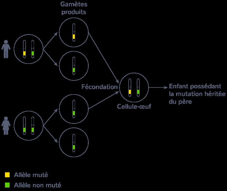 transmission mutation héritée