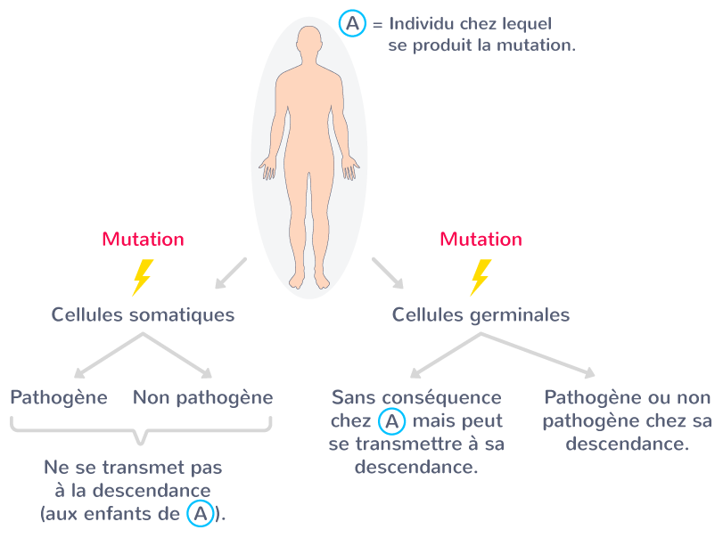 mutation nouvellement produite dysfonctionnement organe problème santé