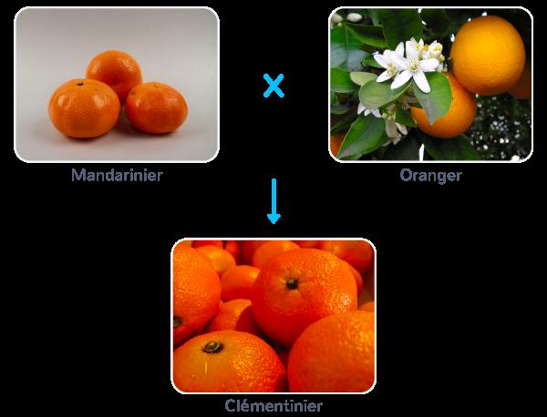 spéciation modification génétiques