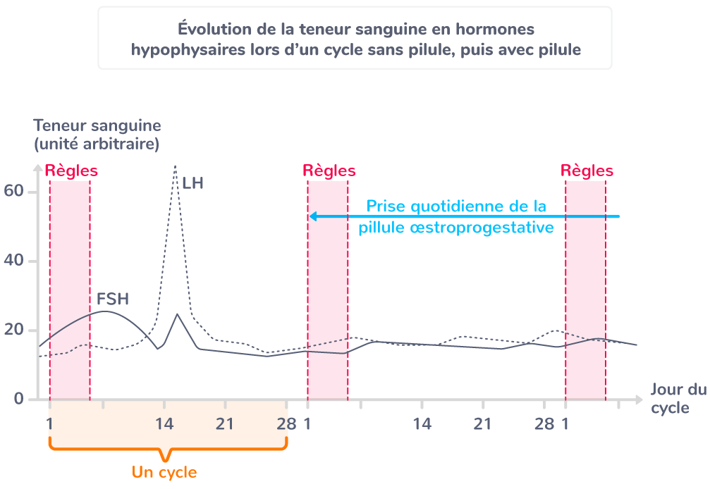 Graphique de l'évolution de la teneur sanguine en hormones hypophysaires lors d'un cycle sans pilule puis avec pilule