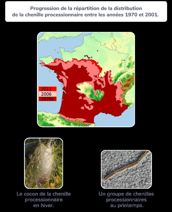 modification biodiversité chenilles processionnaires