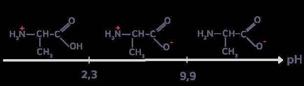 diagramme prédominance différentes formes alanine