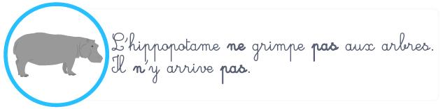 phrase négative n' ne pas