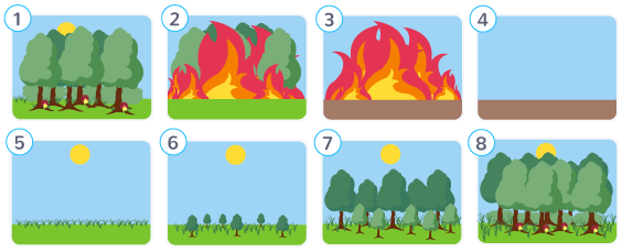 écosystèmes perturbations résilences exemple incendie forêt