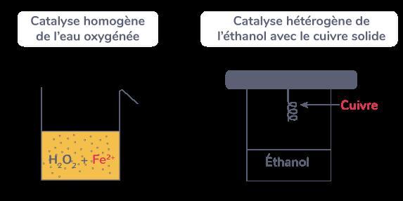 plusieurs types catalyses homogène hétérogène enzymatique