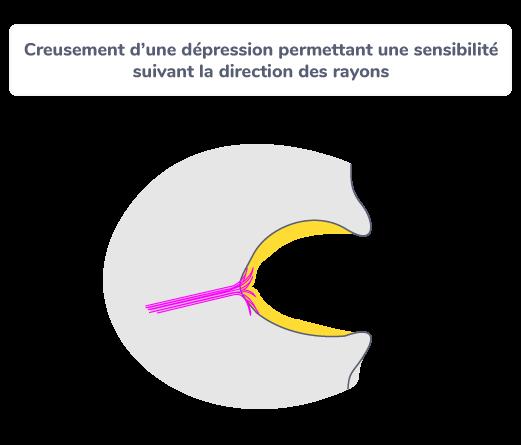 Creusement d'une dépression permettant une sensibilité suivant la direction des rayons