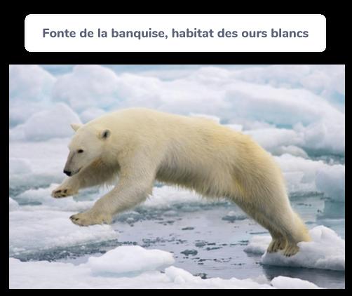 Fonte de la banquise, habitat des ours blancs