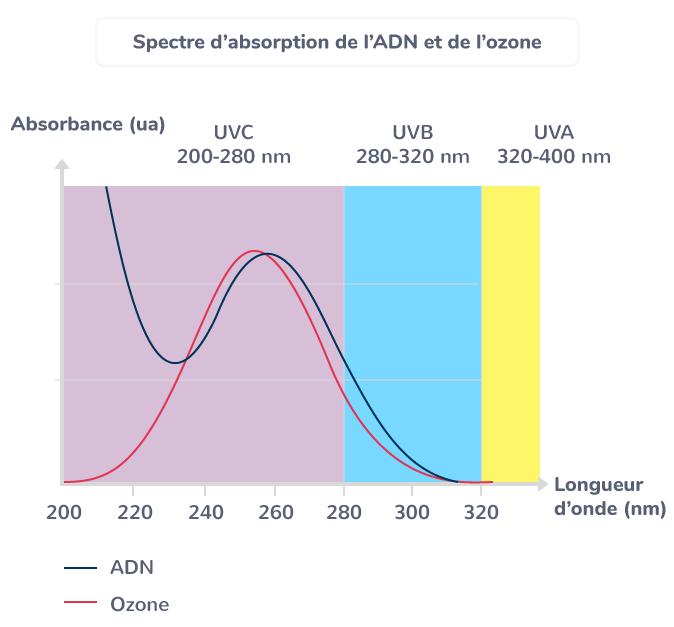 ozone atmosphérique protège ADN mutations