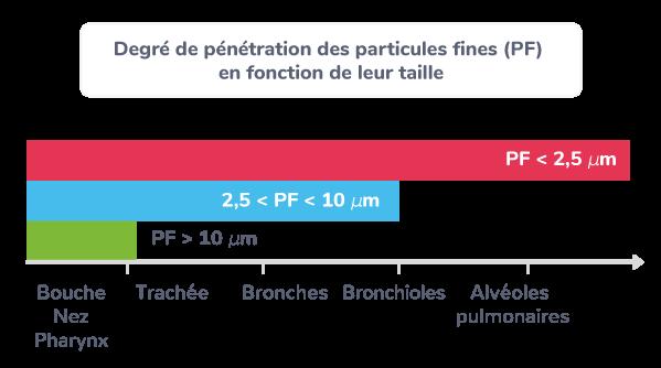 Degré de pénétration des particules fines (PF) en fonction de leur taille