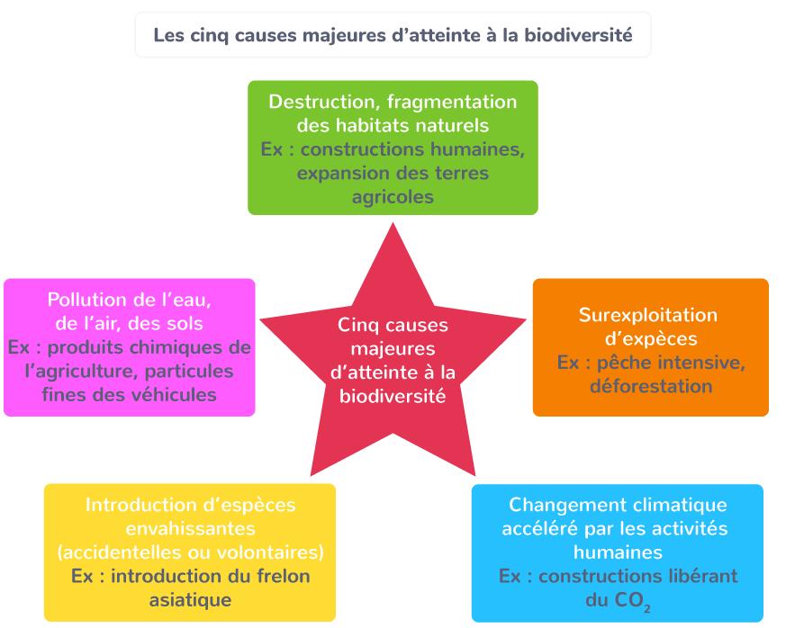 Les cinq causes majeures d'atteinte à la biodiversité