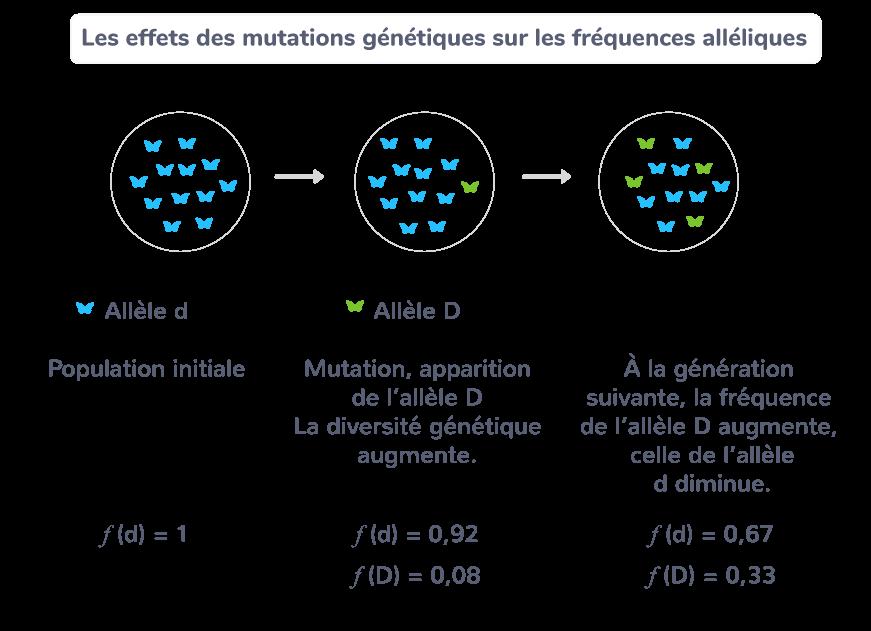 Les effets des mutations génétiques sur les fréquences alléliques