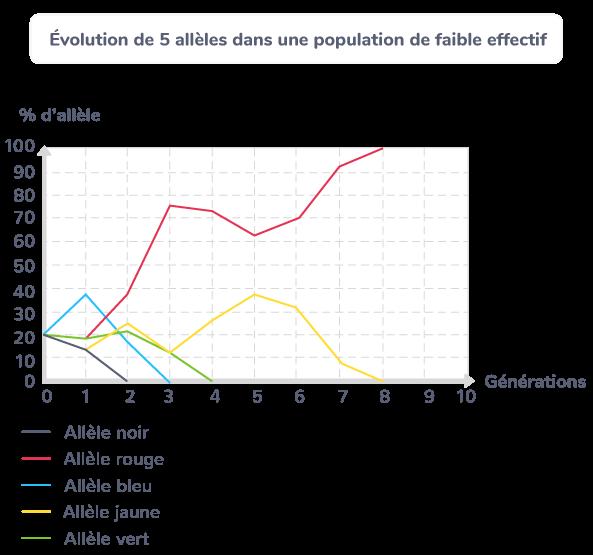 Évolution de 5 allèles dans une population de faible effectif.