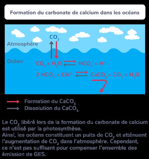 Formation du carbonate de calcium dans les océans