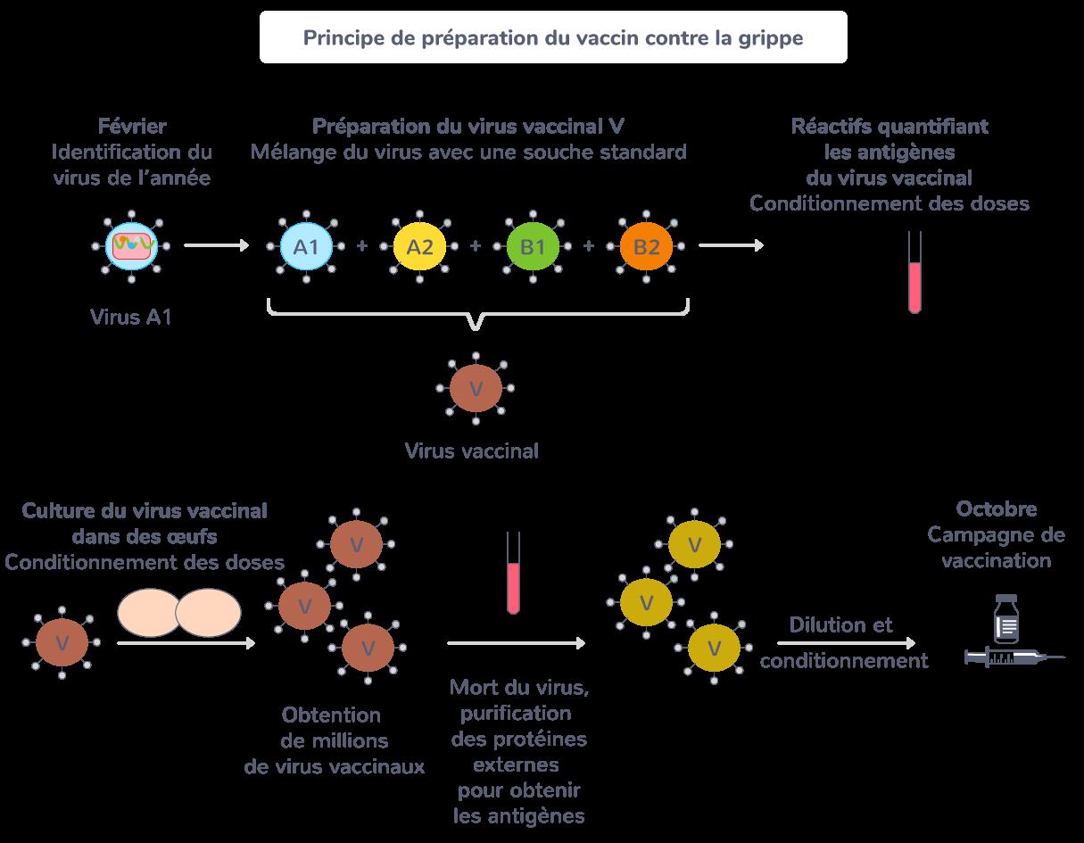 Principe de préparation du vaccin contre la grippe