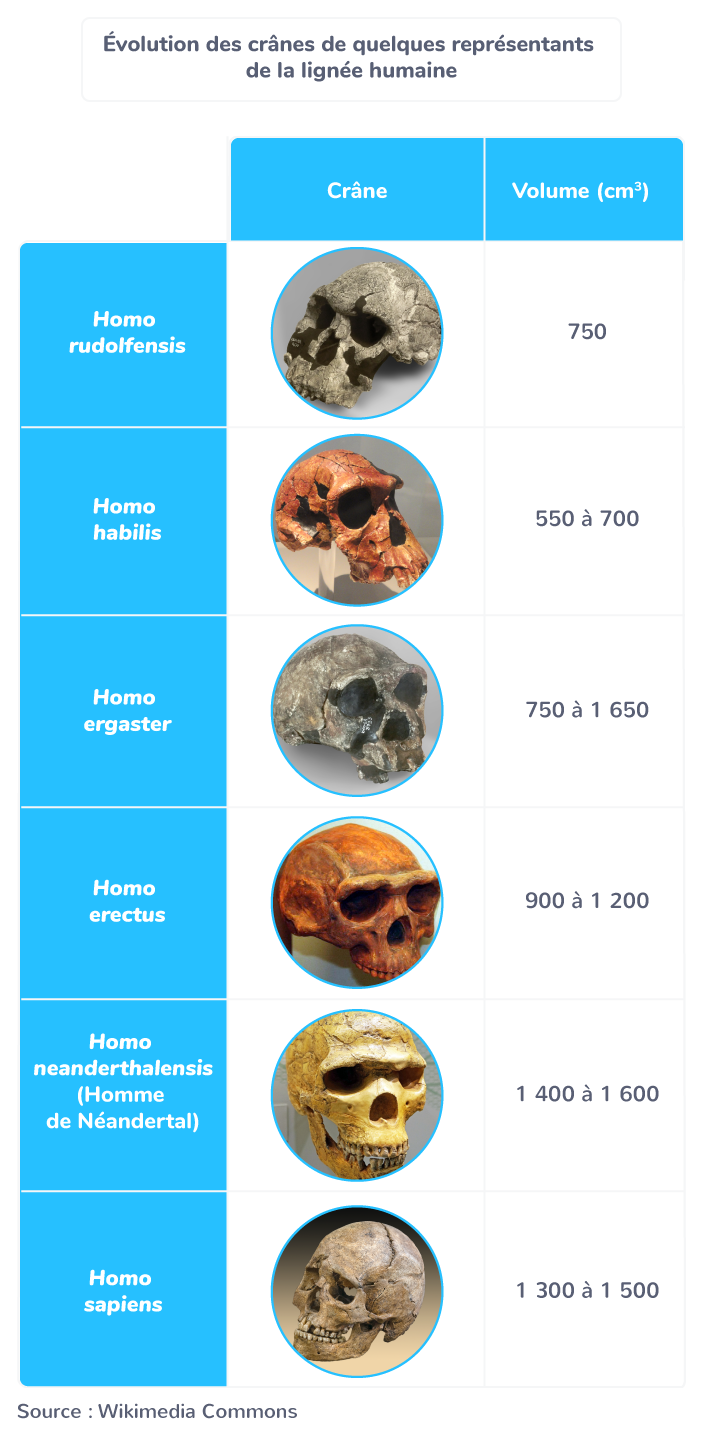 caractères génétiques genre Homo