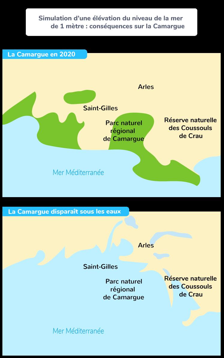 Simulation d'une élévation du niveau de la mer de 1 m : conséquences sur la Camargue