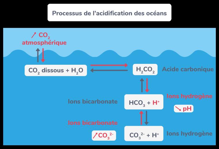 Processus de l'acidification des océans