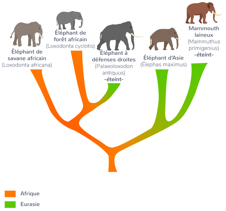 Analyse du génome