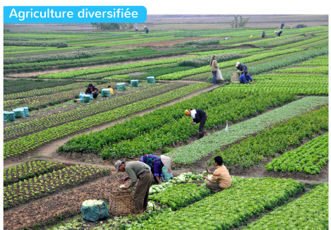 Agriculture diversifiée