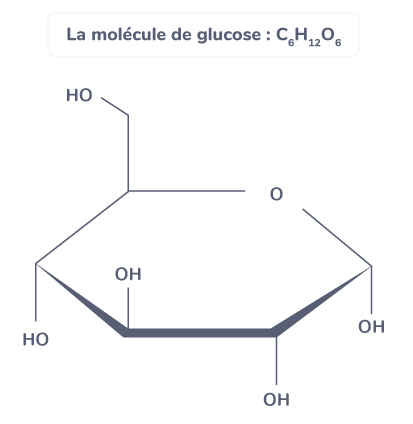 contrôle flux glucose glycémie molécule