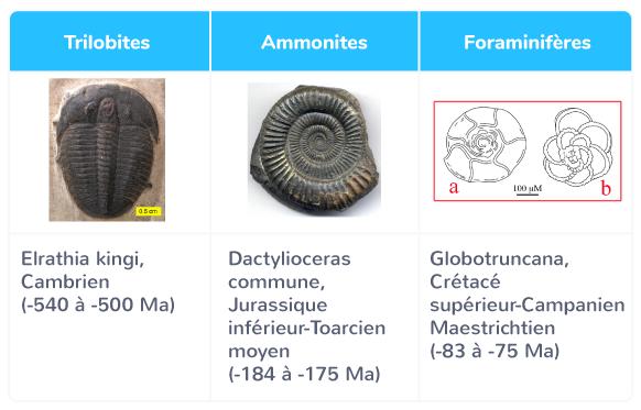 Les différents fossiles stratigraphiques