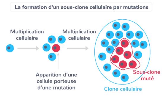 génotype individus ADN mutation sous-clone cellules