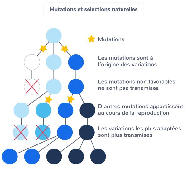 Mutations et sélections naturelles