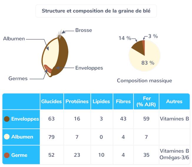 structure et composition graine de blé