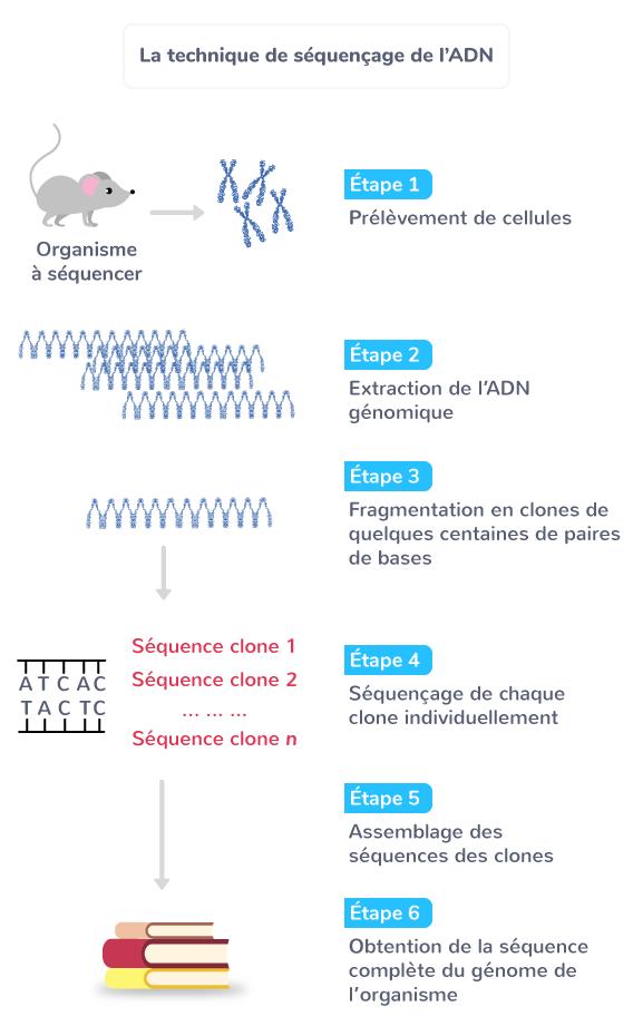 La technique de séquençage de l'ADN