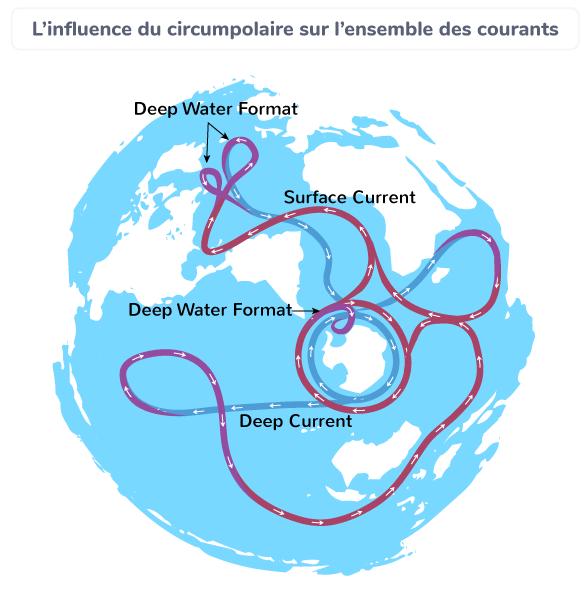 L'influence du circumpolaire sur l'ensemble des courants