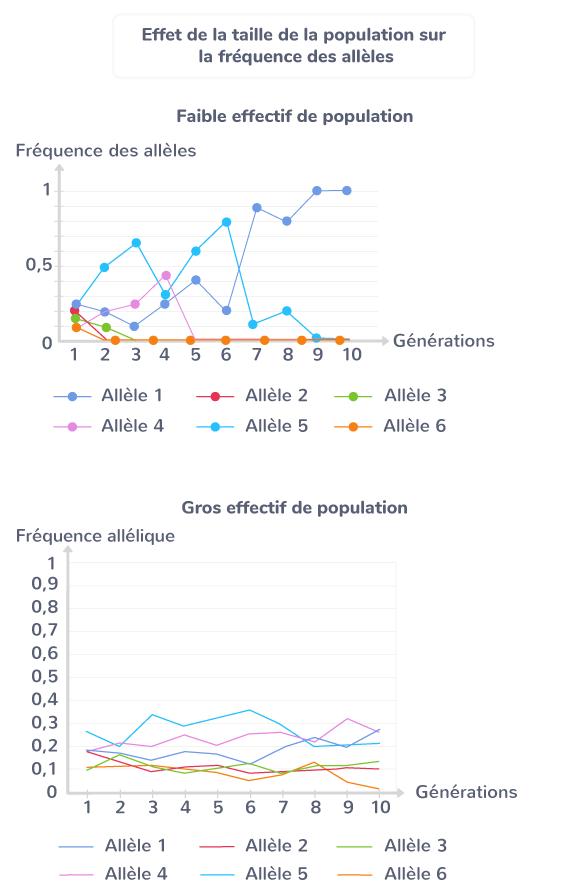 Effet de la taille de la population sur la fréquence des allèles