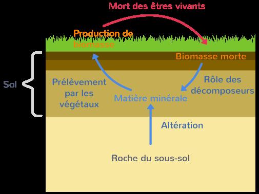 caractéristiques sols production biomasse