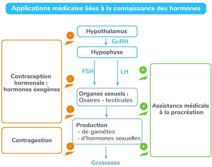 hormones procréation humaine