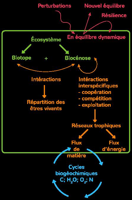 écosystèmes interactions dynamiques