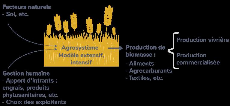 structure fonctionnement agrosystèmes