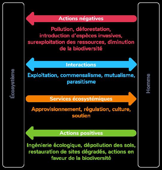 humanité écosystèmes gestion