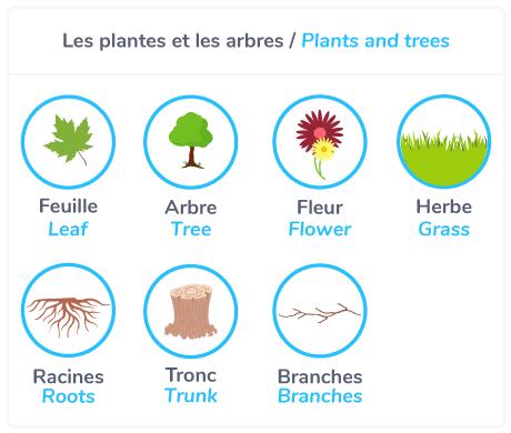 Plants and trees =les plantes et les arbres